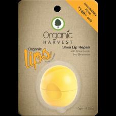 Shea  Lip Balm 10g Organic Harvest